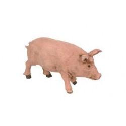Cerdo durexina